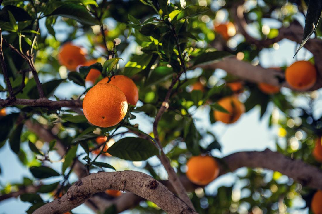 Aumenta un 19% la producción agraria asegurada en 2020